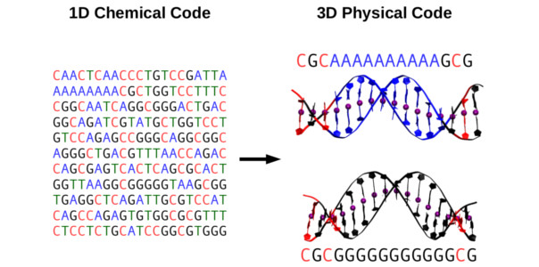Towards Deciphering the Physical Code of DNA